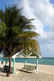与棕榈树的加勒比小屋 库存图片