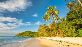 与棕榈树的原始海滩在日落前的金黄光 免版税库存图片