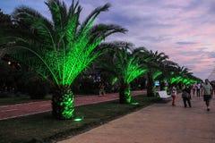 与棕榈树的城市堤防照亮与绿灯 免版税图库摄影