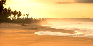 与棕榈树的夏天沙滩在日落 免版税库存图片