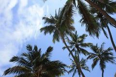 与棕榈树的天空 免版税图库摄影