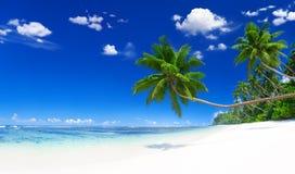 与棕榈树的平静的场面海滩 库存照片