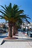 与棕榈树的散步 库存图片