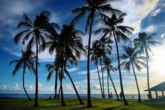 与棕榈树的日出在盐池塘海滩公园 免版税库存照片