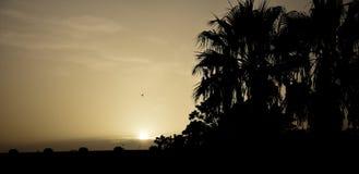 与棕榈树的日落和鸟在马拉加沿岸航行 免版税库存图片