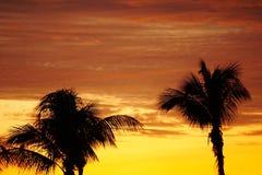 与棕榈树的日落热带天空 免版税库存图片