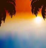 与棕榈树的日落背景 免版税库存图片