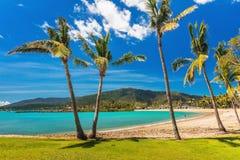 与棕榈树的沙滩, Airlie海滩, Whitsundays, Queensla 免版税库存照片