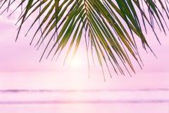 与棕榈树的海滩背景 热带海滩棕榈叶 免版税库存照片