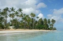 与棕榈树的海滩,多米尼加共和国 库存图片
