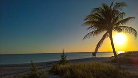 与棕榈树的海滩日落 免版税库存图片