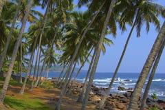 与棕榈树的海洋海滩 免版税库存图片
