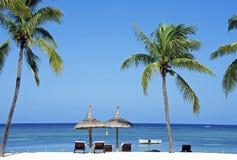 与棕榈树的海滩 免版税库存图片