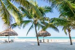 与棕榈树的热带假期视图在加勒比海的异乎寻常的沙滩 免版税库存照片