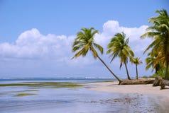 与棕榈树的热带岸 免版税图库摄影