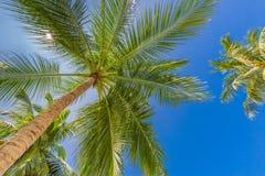 与棕榈树的热带样式和热带海滩背景的蓝天 免版税库存照片