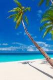 与棕榈树的热带沙子海滩,暑假垂直的酸碱度 图库摄影