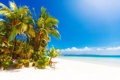 与棕榈树的热带沙子海滩,暑假 图库摄影