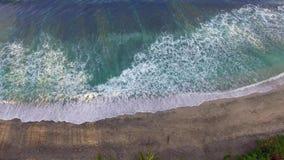 与棕榈树的热带海岸线 股票视频