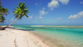 与棕榈树的热带海滩在法属波利尼西亚 影视素材
