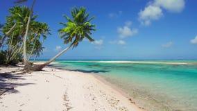 与棕榈树的热带海滩在法属波利尼西亚 股票录像