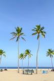 与棕榈树的热带海滩在劳德代尔堡 库存照片