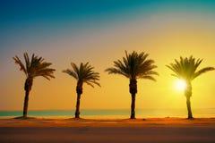 与棕榈树的热带海滩在日落 免版税库存照片