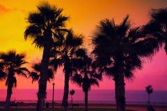 与棕榈树的热带海滩在日落 库存图片