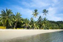 与棕榈树的热带海滩 免版税库存照片