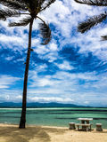 与棕榈树的热带海滩 库存照片