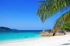 与棕榈树的热带白色沙子海滩 免版税库存照片