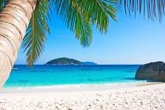 与棕榈树的热带白色沙子海滩 免版税库存图片