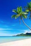 与棕榈树的热带白色沙子海滩 库存图片