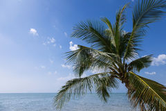 与棕榈树的热带风景反对天空 免版税图库摄影