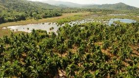 与棕榈树的热带风景在菲律宾 股票录像