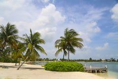 与棕榈树的美丽的异乎寻常的加勒比海滩在大开曼 库存照片