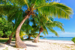 与棕榈树的美丽的海滩在塞舌尔群岛 免版税图库摄影