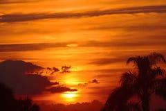 与棕榈树的美丽的金黄毛伊,夏威夷日落 免版税库存照片