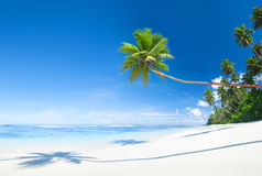 与棕榈树的美丽的风景海滩 图库摄影
