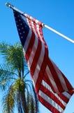 与棕榈树的美国国旗 免版税图库摄影