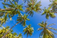 与棕榈树的美好的热带样式和热带海滩背景的蓝天 免版税图库摄影