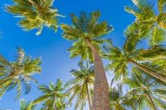 与棕榈树的美好的热带样式和热带海滩背景的蓝天 免版税库存图片