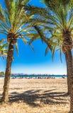 与棕榈树的西班牙马略卡美丽的海滩在Alcudia 免版税图库摄影