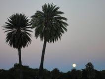 与棕榈树的超级月亮,檀香山 图库摄影