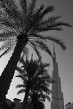 与棕榈树的迪拜地平线 免版税库存图片