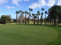 与棕榈树的高尔夫球绿色 库存照片