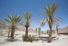 与棕榈树的绿洲在一个被隔绝的沙漠谷 免版税库存照片