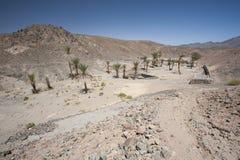 与棕榈树的绿洲在一个被隔绝的沙漠谷 免版税库存图片