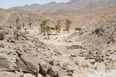 与棕榈树的绿洲在沙漠谷 库存图片