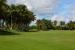 与棕榈树的绿色领域 库存图片
